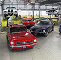 Mustangs in workshop